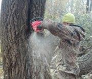 +7(930)893-30-03 Спиливание деревьев, корчевание пней и расчистка участков. Цены ниже! Качество и гарантия безопасности! Кронирование, спиливание и обрезка в Тульской области. http://drovosek.expert/ Спилить дерево, удалить, корчевать, выкорчевать расчистить, вывезти