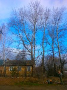 https://drovosek.expert/ +7(930)893-30-03 Спиливание деревьев, корчевание пней и расчистка участков. Цены ниже! Качество и гарантия безопасности! Кронирование, спиливание и обрезка в Тульской области. https://drovosek.expert/ Спилить дерево, удалить, корчевать, выкорчевать расчистить, вывезти