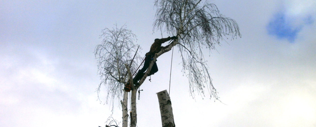 https://drovosek.expert/ +7(930)893-30-03 Спиливание деревьев, корчевание пней и расчистка участков. Цены ниже! Качество и гарантия безопасности! Кронировани