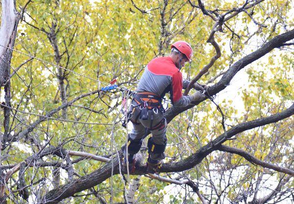 Про обрезку деревьев