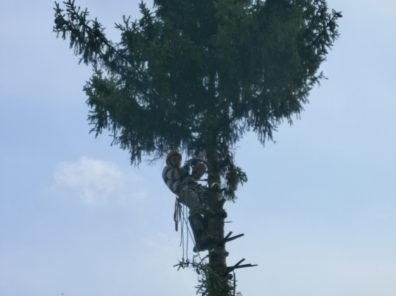 Спил ели во дворе частного дома в г. Одоев Тульской области.