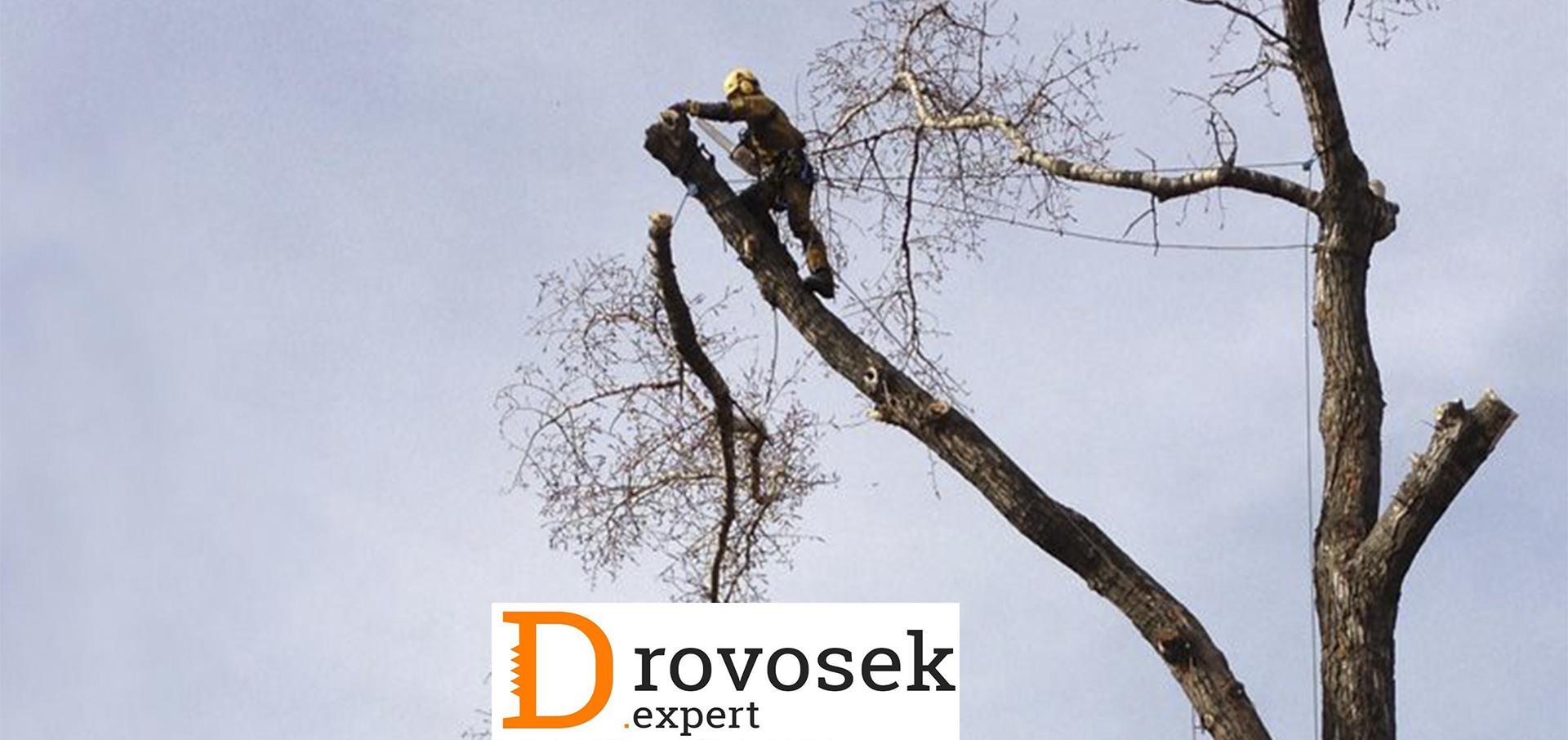 Спиливание деревьев арбористами