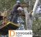 Спиливание деревьев с автовышкой