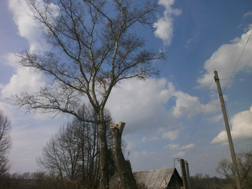 Кронировать, спилить тополь и обрезка деревьев в Тульской области. https://drovosek.expert/