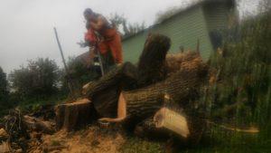 Спилить дерево, удалить, корчевать, выкорчевать расчистить, вывезти корчевание пней и расчистка участков.