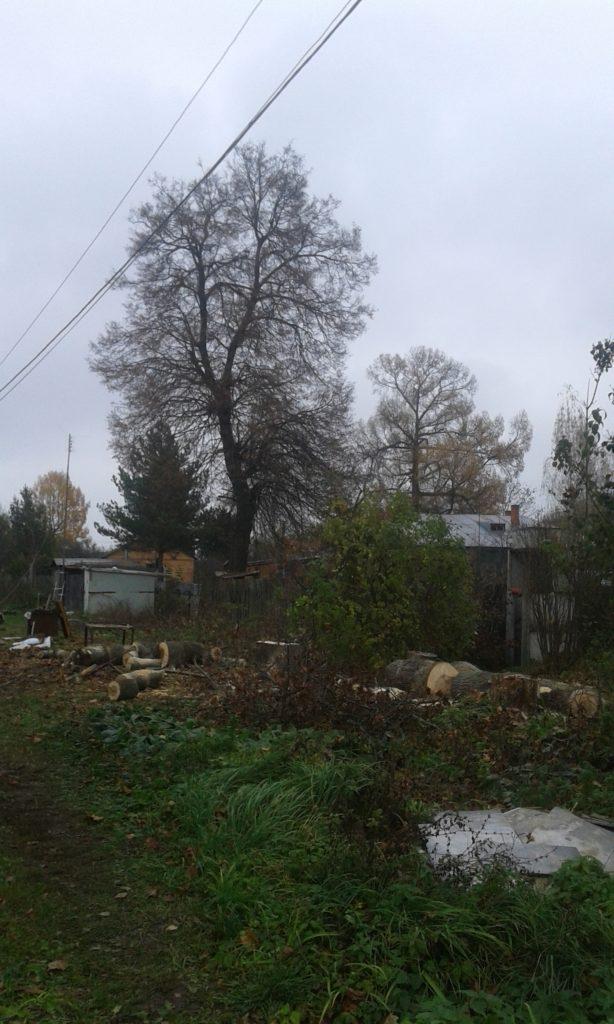 Спилить дерево, удалить, корчевать, выкорчевать расчистить, вывезти корчевание пней и расчистка участков. Цены ниже