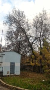 Спиливание деревьев https://drovosek.expert/ , Спилить дерево, удалить, корчевать, выкорчевать расчистить, вывезти корчевание пней и расчистка участков. Цены ниже! Качество и гарантия безопасности! Кронировать, спилить тополь и обрезка деревьев в Тульской области. https://drovosek.expert/ Спилить дерево, удалить, корчевать, выкорчевать расчистить, вывезти