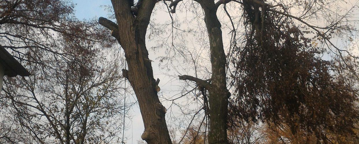 Спиливание деревьев https://drovosek.expert/ , Спилить дерево, удалить, корчевать, выкорчевать расчистить, вывезти корчевание пней и расчистка участков. Цены ниже! Качество и гарантия безопасности! Кронировать, спилить тополь и обрезка деревьев в Тульской области. https://drovosek.expert/ Спилить дерево, удалить, корчевать, выкорчевать расчистить, вывезти5