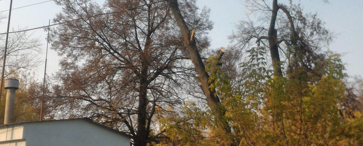 Спиливание деревьев https://drovosek.expert/ , Спилить дерево, удалить, корчевать, выкорчевать расчистить, вывезти корчевание пней и расчистка участков. Цены ниже! Качество и гарантия безопасности! Кронировать, спилить тополь и обрезка деревьев в Тульской области. https://drovosek.expert/ Спилить дерево, удалить, корчевать, выкорчевать расчистить, вывезти3