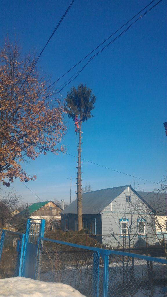 Арборист аккуратно удаляет крону дерева по частям