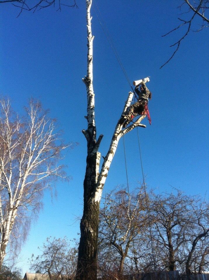Качество и гарантия безопасности! Кронировать, спилить тополь и обрезка деревьев в Тульской области. https://drovosek.expert/ https://prom-alp.expert/ Спилить дерево, удалить, корчевать, выкорчевать расчистить, вывезти