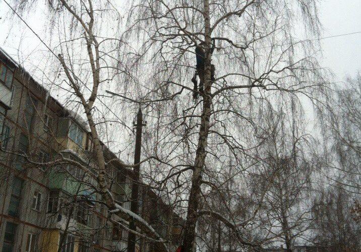 Кронировать, спилить тополь и обрезка деревьев в Тульской области. https://drovosek.expert/ Спилить дерево, удалить, корчевать, выкорчевать расчистить, вывезти