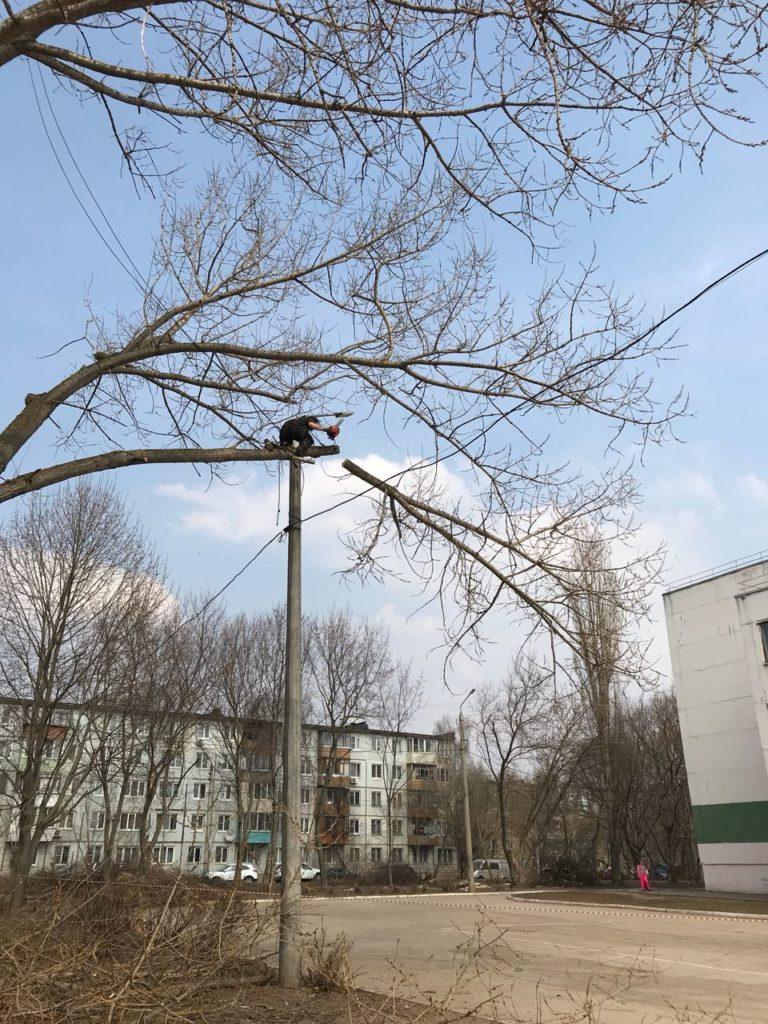 Арборист опиливает ветви нависшие над проводами