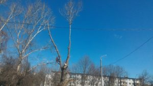 Заканчиваем опииливание кроны дерева