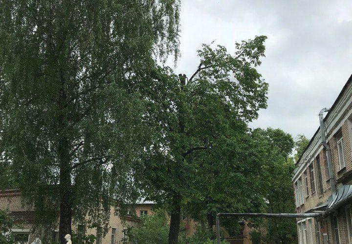 Кронирование и спиливание деревьев во дворе детского сада в г. Тула