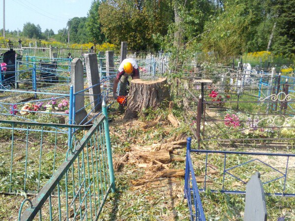 "Ива на кладбище аккуратно спилена по частям ""под корень"""